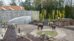 Thumbnail of http://Oregon%20Zoo%20Elephant%20Lands%208