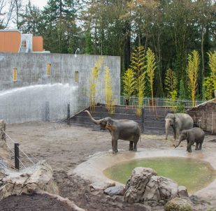 Oregon Zoo Elephant Lands 8