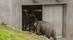 Thumbnail of http://Oregon%20Zoo%20Elephant%20Lands%207