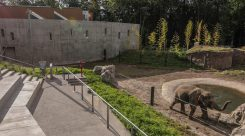 Thumbnail of http://Oregon%20Zoo%20Elephant%20Lands%205