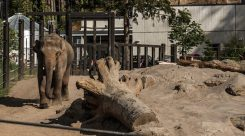 Thumbnail of http://Oregon%20Zoo%20Elephant%20Lands%202